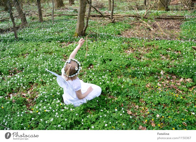 Nature Plant Tree Flower Landscape Forest Environment Warmth Spring Bright Free Happiness Beautiful weather Fairy Elf Wood anemone