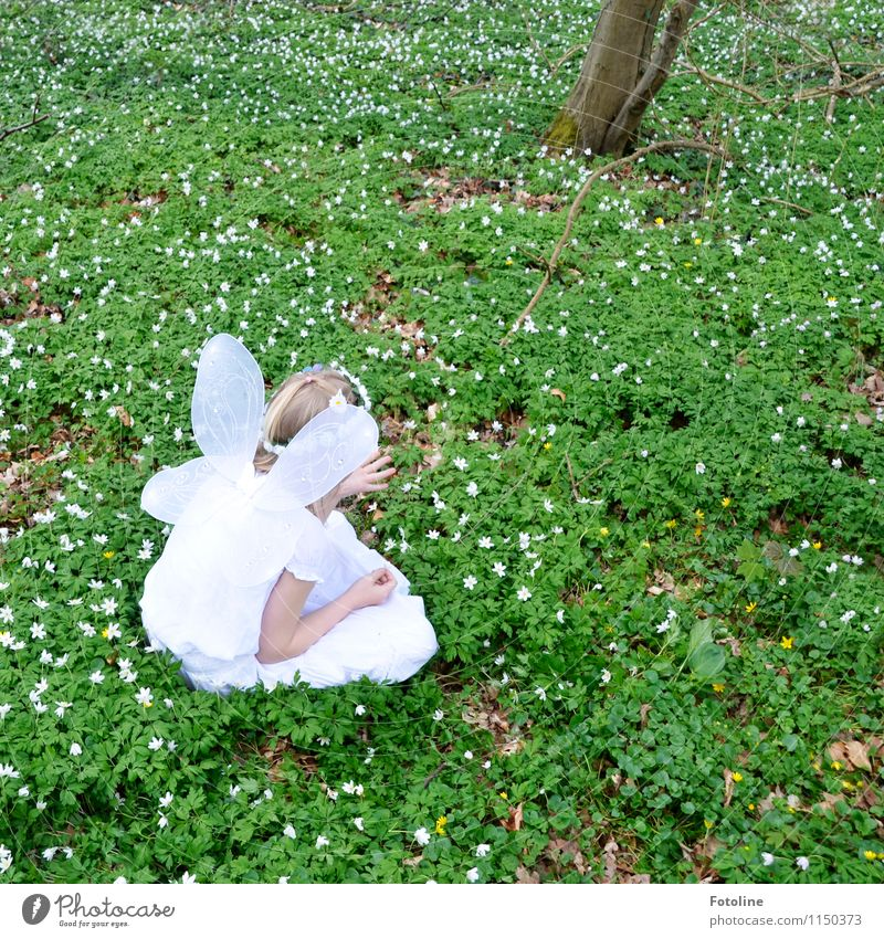 Human being Child Nature Plant Green White Flower Girl Forest Environment Spring Natural Feminine Bright Head Park