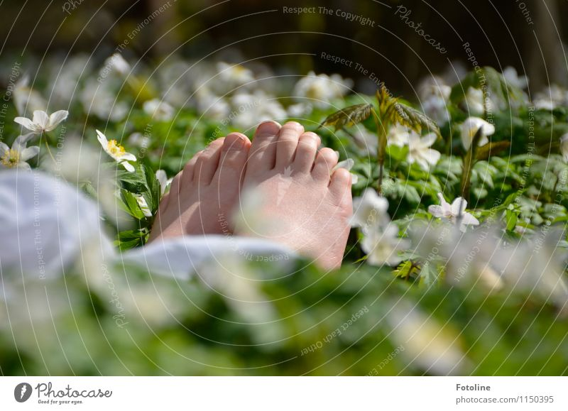 Human being Child Nature Plant Green White Flower Forest Environment Warmth Blossom Spring Natural Bright Feet Park