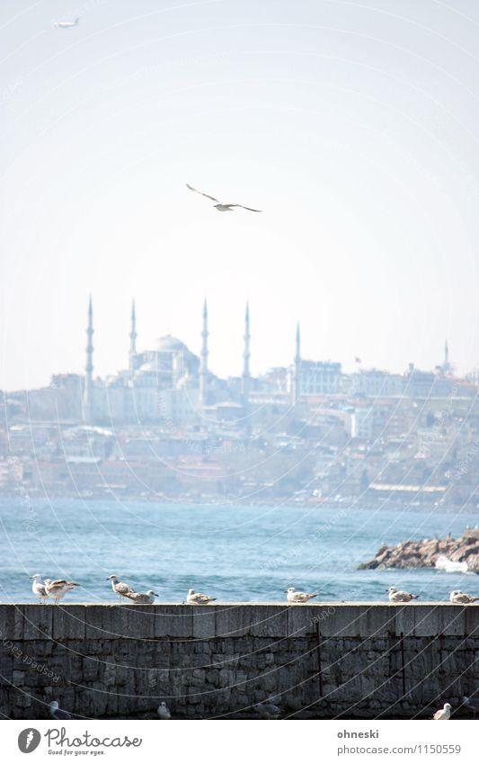 Durable | Istanbul Coast Ocean Sea of Marmara Turkey Tourist Attraction Blue Mosque Bird Seagull Group of animals Flying Vacation & Travel The Bosphorus