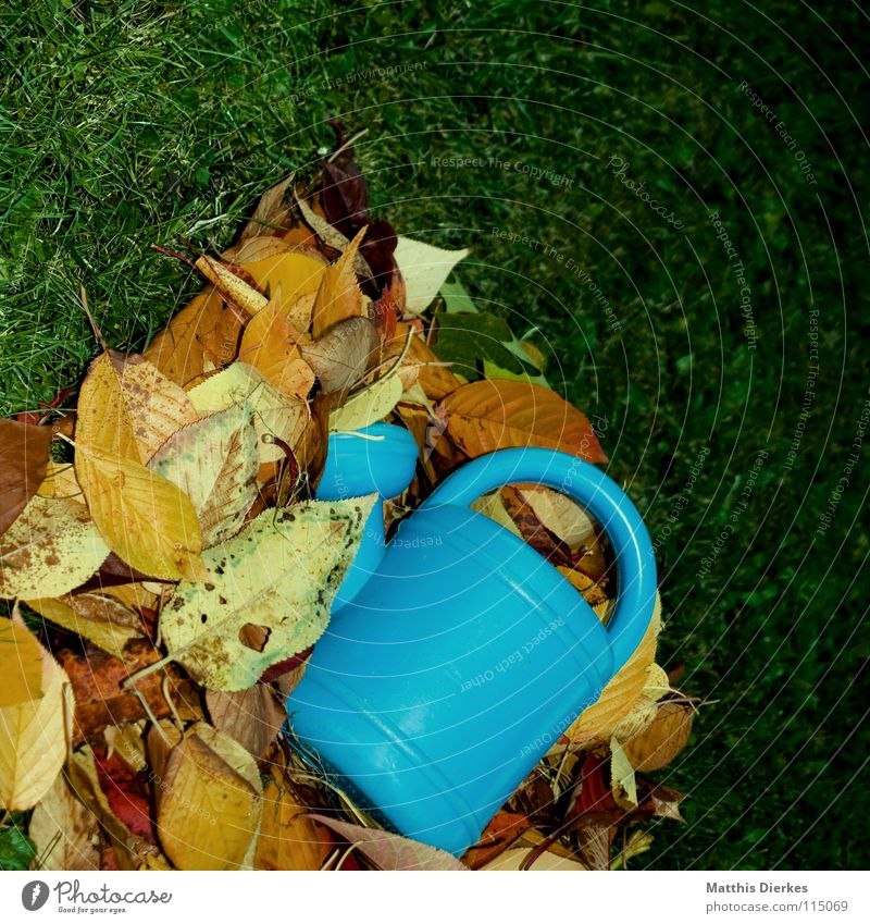watering can Watering can Summer Daisy Meadow Vacation & Travel Closing time Playing Leisure and hobbies Beautiful Calm Autumn Tree Leafless Clouds