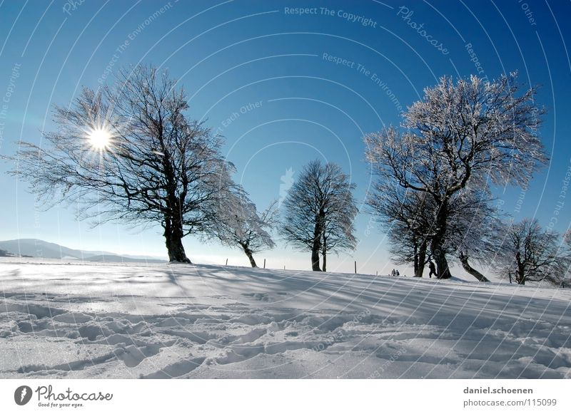 Christmas card 25 (the last one !) Sunbeam Winter Black Forest White Deep snow Winter sports Hiking Leisure and hobbies Vacation & Travel Background picture