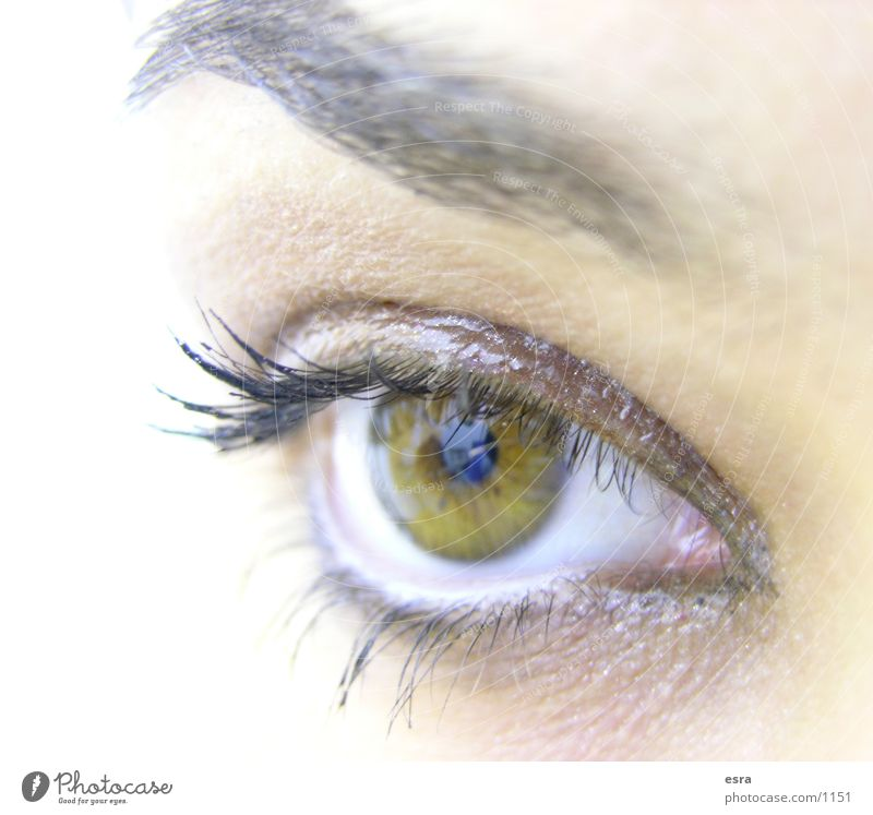 Human being Eyes Looking Eyelash Eyebrow Pupil