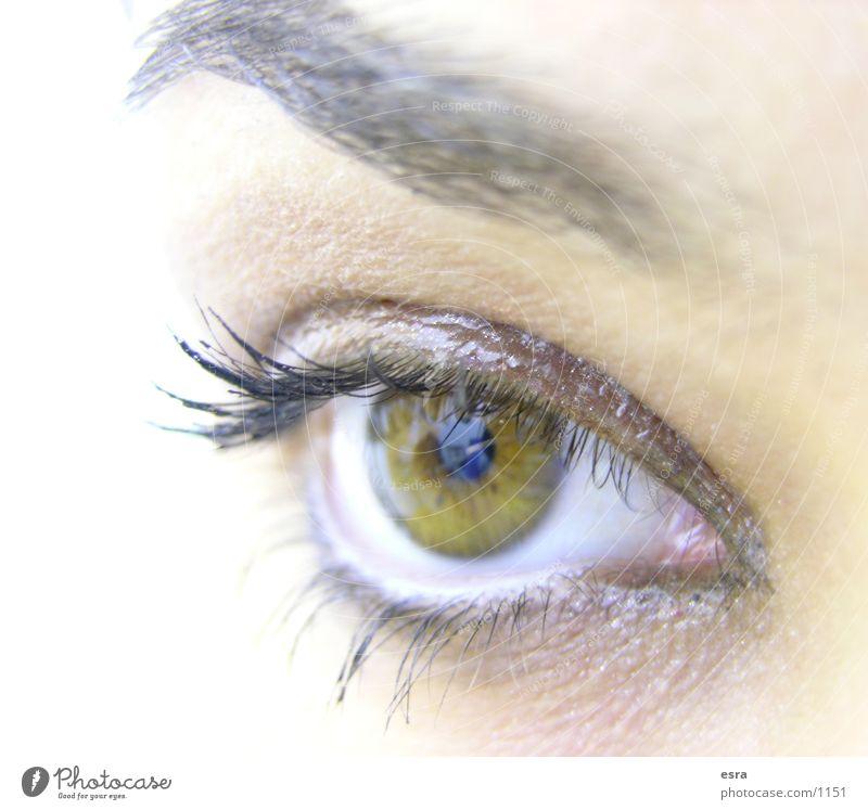 Human being Eyes Looking Eyelash Eyebrow Pupil