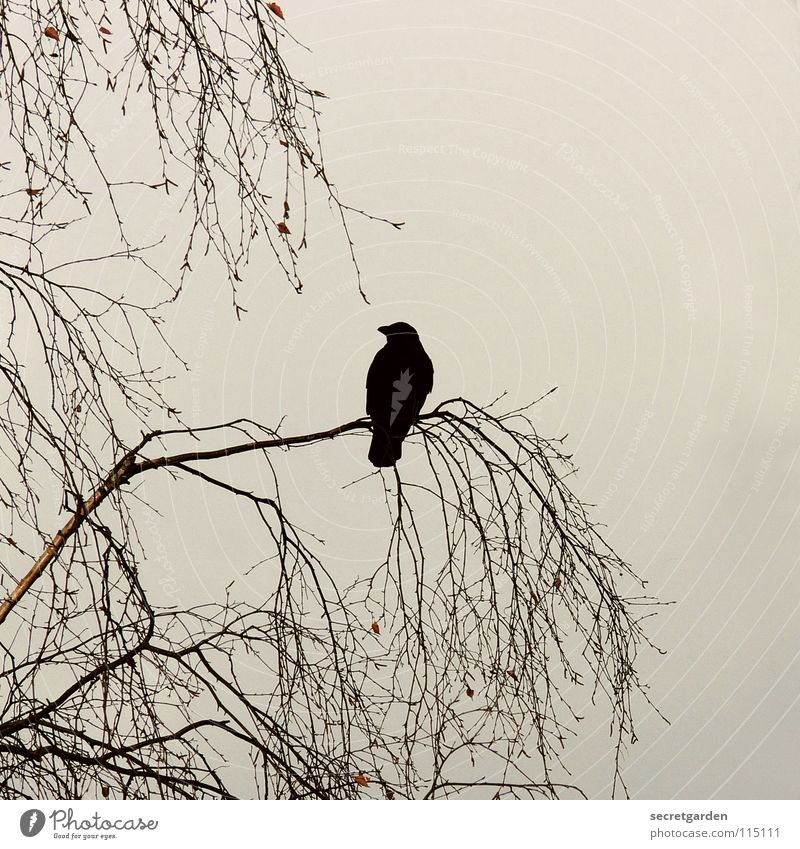 krabat Crow Raven birds Bird Tree Leaf Leafless Winter Autumn Crouch Crouching Room Bad weather Clouds Calm Relaxation Grief Boredom Break Dangerous Menacing