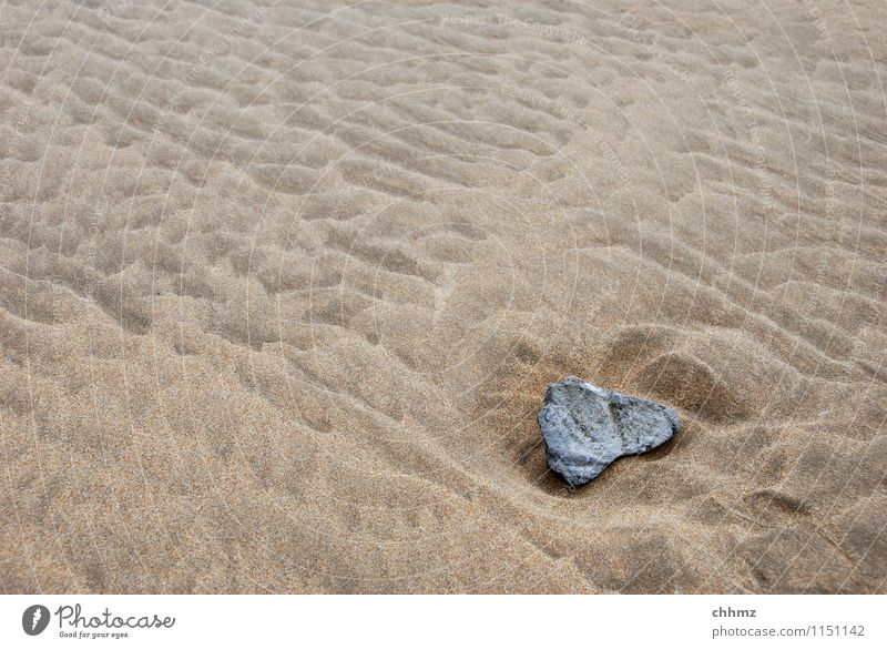Stone in the sand Sand Beach Waves Structures and shapes Weather weathering Damp Wet Untouched Ocean