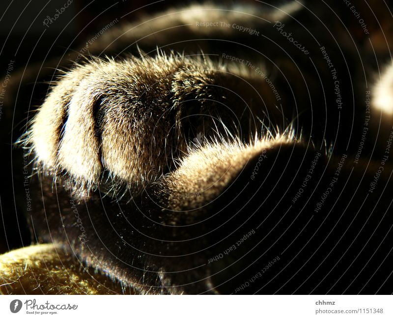cat paws Cat 1 Animal Lie Sleep Serene Calm Hair Delicate Claw Close-up Fuzz Shadow play Colour photo Subdued colour