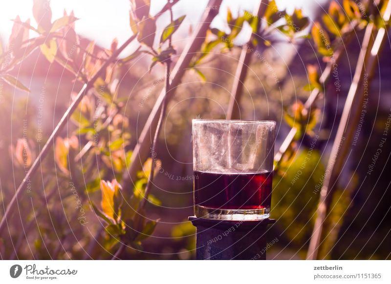 Nature Plant Sun Garden Bright Glass Beverage Wine Garden plot Alcoholic drinks Dazzle Closing time Tendril Bamboo stick Bamboo Evening sun