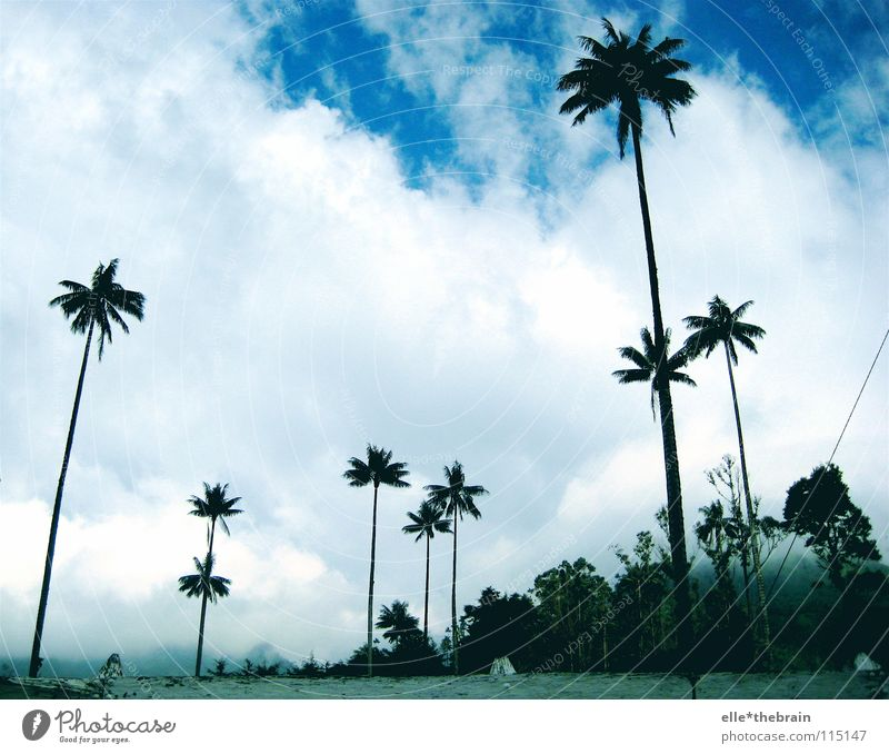 palm Vacation & Travel Beach Palm tree Colombia Summer Blue sky Freedom Weather