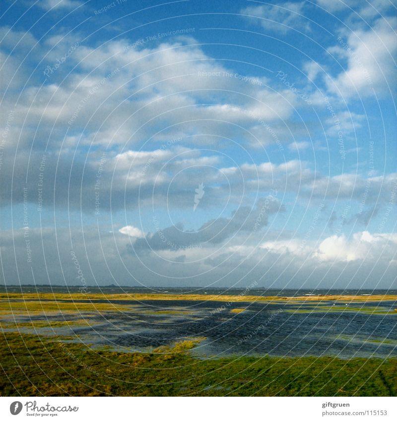 Nature Water Sky Ocean Beach Vacation & Travel Clouds Autumn Meadow Grass Landscape Coast Seasons North Sea November October