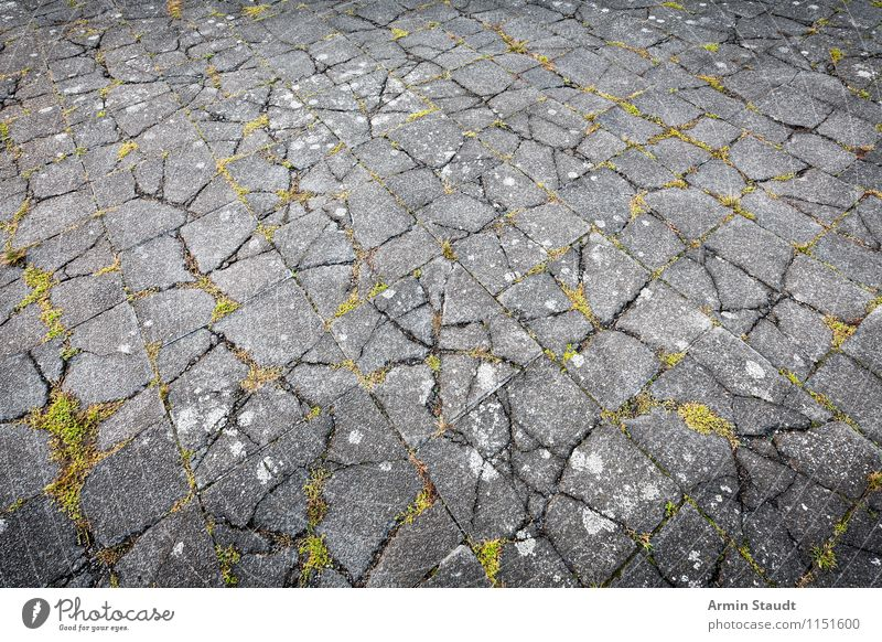 shake Moss Old Authentic Exceptional Trashy Gloomy Gray Green Disaster Design Apocalyptic sentiment Decline Transience Time Sidewalk Stone Stone floor Places