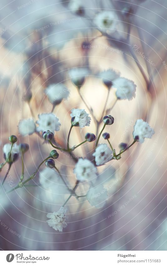 all the best Nature Growth Blossom Bouquet White Romance Birthday Bud Garden Shallow depth of field Frame Plant Flower Superimposed Baby's-breath Colour photo