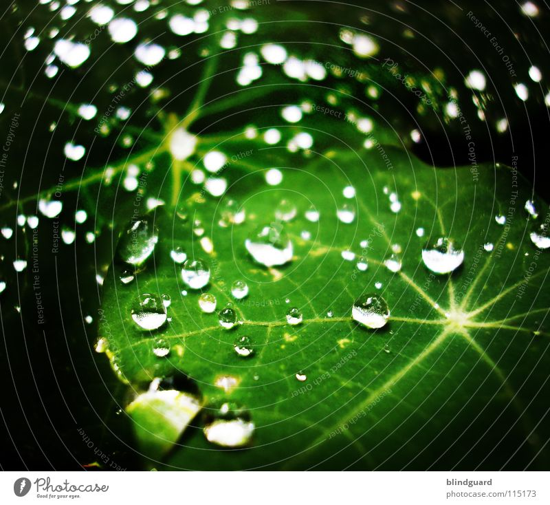 Green Water Leaf Life Small Garden Line Rain Park Glittering Fresh Drops of water Large Wet Star (Symbol)