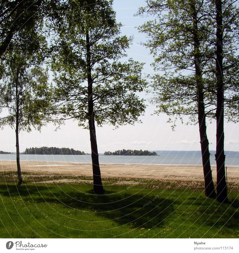 lake idyll Lake Tree Calm Loneliness Beach Water Coast Nature Plant Shadow Idyll Sweden