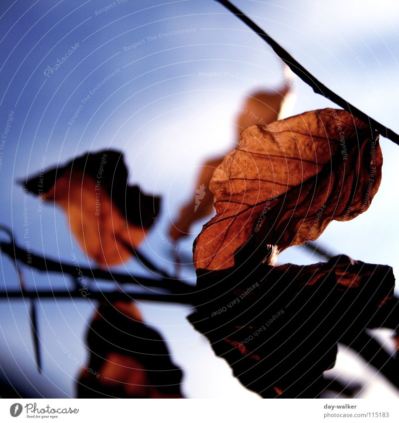got caught Leaf Clouds Autumn Winter Seasons Cold Vessel Emotions Light Branch Sky Close-up Freedom Shadow