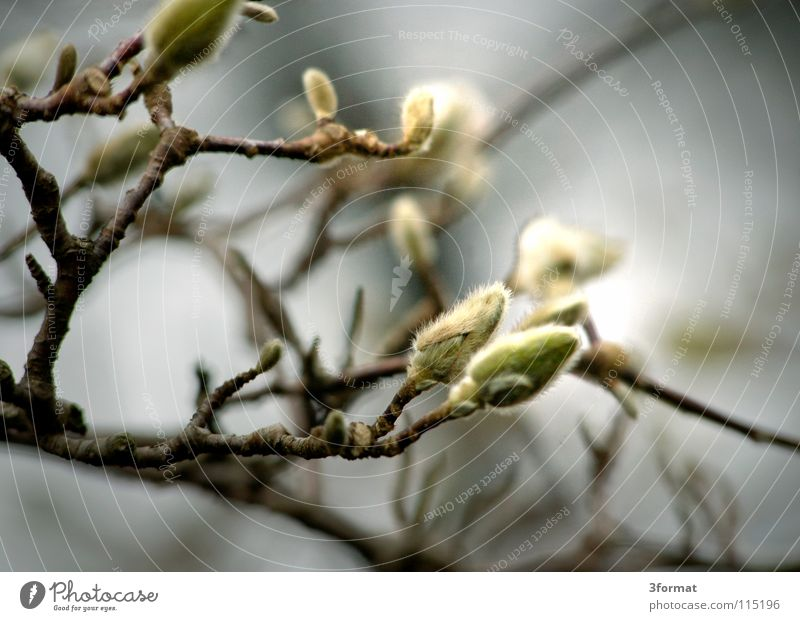 Nature Tree Plant Winter Loneliness Dark Cold Autumn Blossom Spring Dream Sadness Rain Fog Environment Drops of water