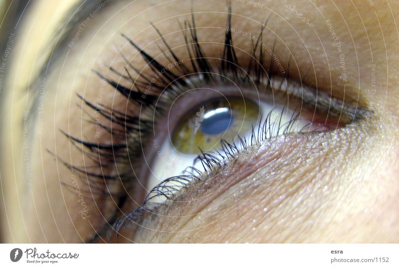 Woman Eyes Eyelash Eyebrow Pupil