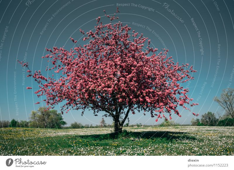 Spring Fever (4) Environment Nature Landscape Plant Sky Cloudless sky Tree Flower Grass Bushes Blossom Garden Park Meadow Blossoming Fragrance Natural Beautiful