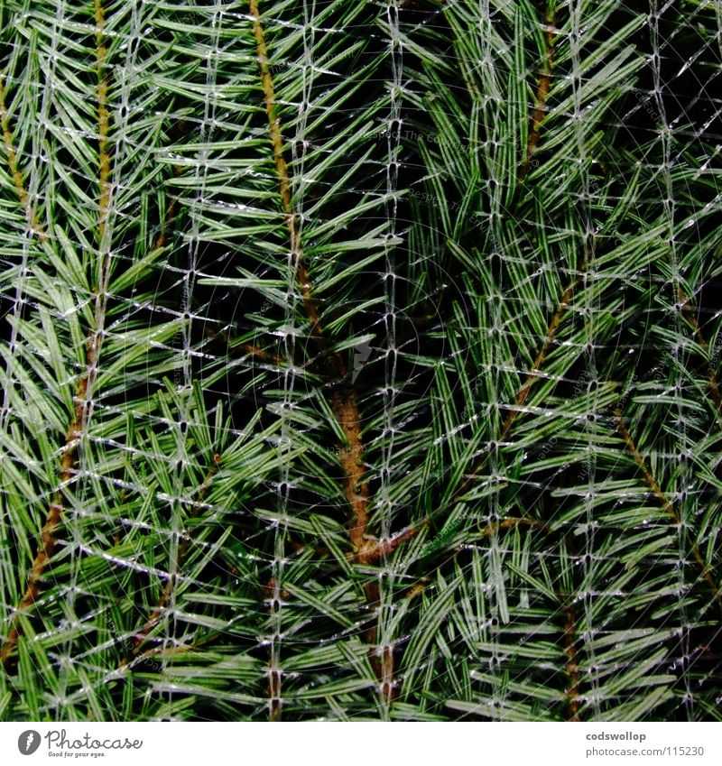 flatpack christmas Packaging Christmas tree Fir tree December Sustainability Agriculture Tradition Tree Living room Winter Evergreen plants evergreen fir
