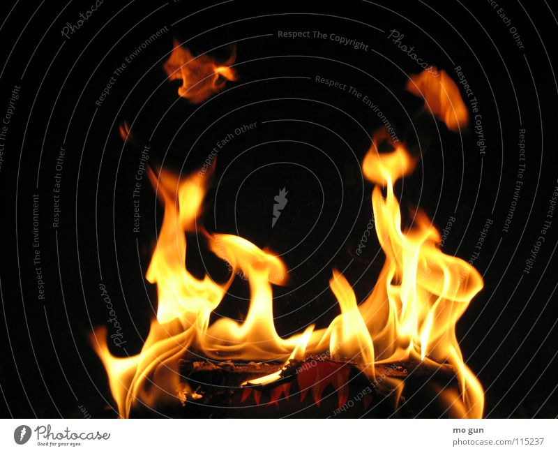 Black Warmth Wild animal Dangerous Nutrition Threat Blaze Fire Romance Hot Physics Barbecue (event) Flame Cozy Burn Fireside