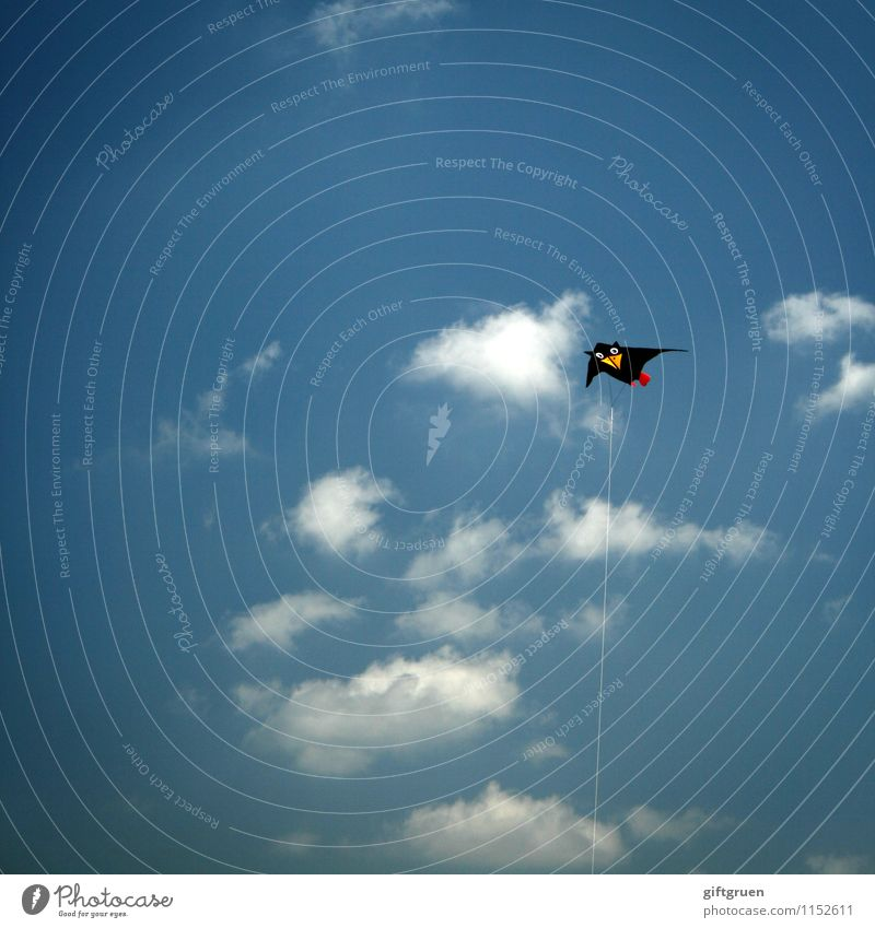 Sky Blue Sun Clouds Joy Black Funny Playing Freedom Flying Above Air Leisure and hobbies Infancy Wind Happiness