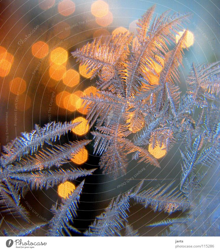 Christmas & Advent Winter Cold Window Light Think Warmth Ice Frost Physics Trust Crystal structure Ice crystal Frostwork