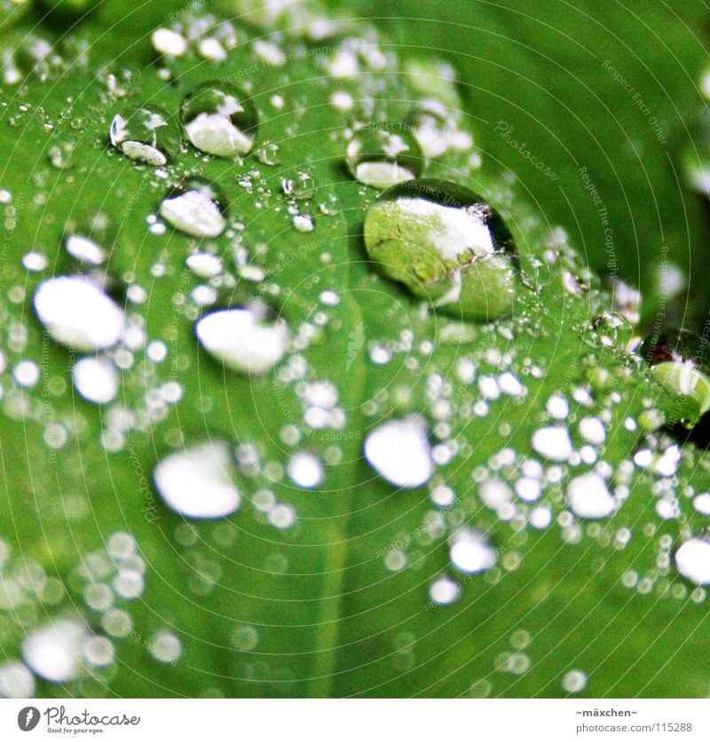 dribbles Green Leaf Glittering Reflection Light Depth of field Blur White Damp Wet Calm Stagnating Dry Beautiful Drops of water Surface tension