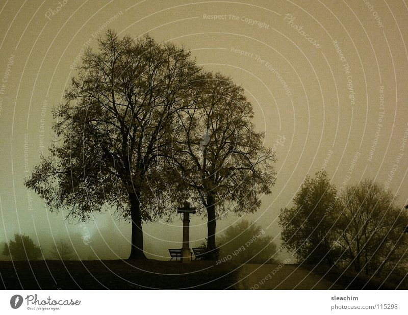 Trees at night Night Park Religion and faith Leisure and hobbies Meadow Grass Fog Green Garden Back Bench Lanes & trails Nature