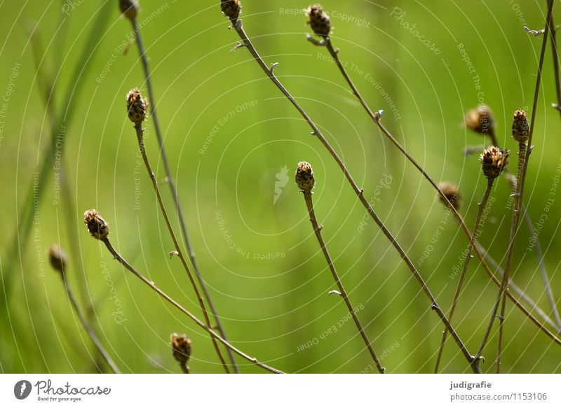meadow Environment Nature Plant Grass Garden Park Meadow To dry up Growth Dry Wild Green Transience Colour photo Exterior shot Day Shallow depth of field