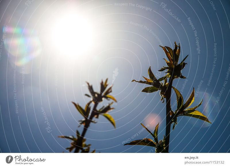 Nature Plant Blue Summer Tree Sun Leaf Calm Life Spring Garden Bright Growth Illuminate Energy Climate