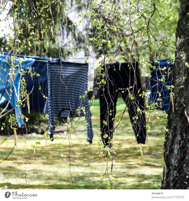 air-dried Living or residing Garden Sunlight Spring Summer Beautiful weather Tree Grass Birch tree Clothing Pants Sweater Pyjama Clothesline Hang Funny