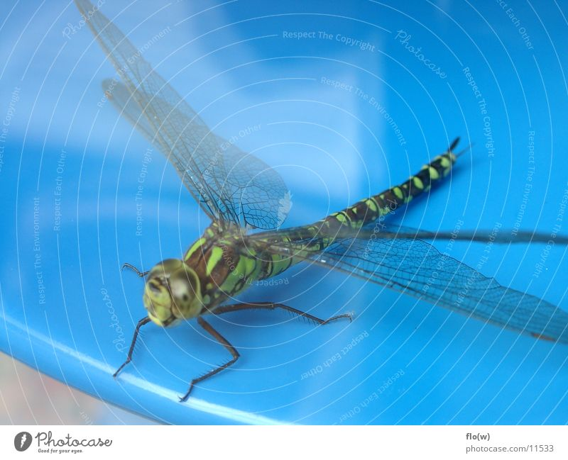 dragonfly Dragonfly Animal Green Insect Wing