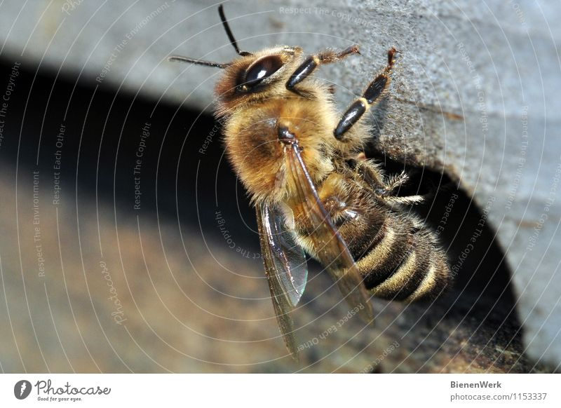 Nature Animal Black Environment Yellow Brown Fear Gold Climate Communicate Uniqueness Clean Environmental protection Bee Sustainability Silver