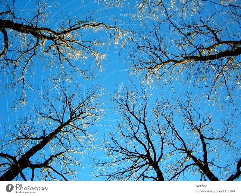 Nature Sky Tree Blue Winter Cold Free Tall Fresh To go for a walk Branch Peak To enjoy Treetop Branchage