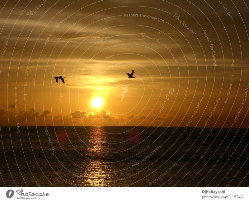 Sky Beautiful Sun Ocean Clouds Moody Bird Sunset