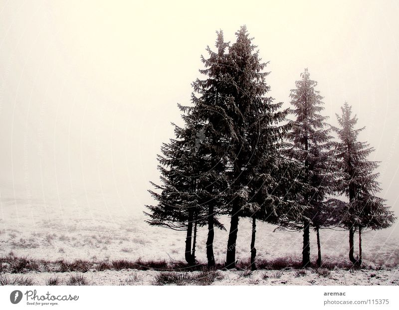 Winter Calm Loneliness Cold Snow Meadow Landscape Moody Fog Fir tree