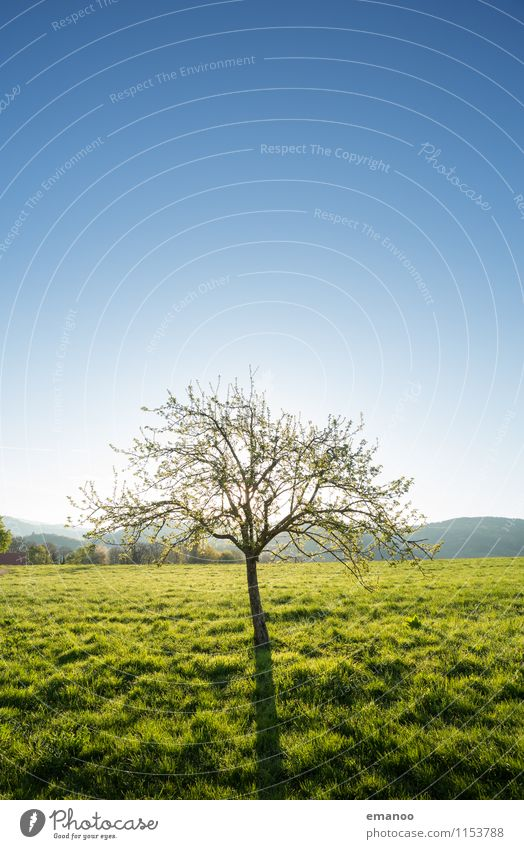 Sky Nature Blue Plant Green Summer Tree Landscape Far-off places Mountain Spring Meadow Grass Small Garden Freedom