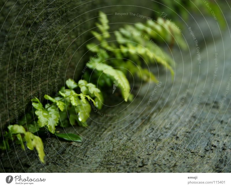 Nature Green Plant Leaf Loneliness Autumn Wood Rain Small Wet Arrangement Stairs Growth Near Delicate Damp