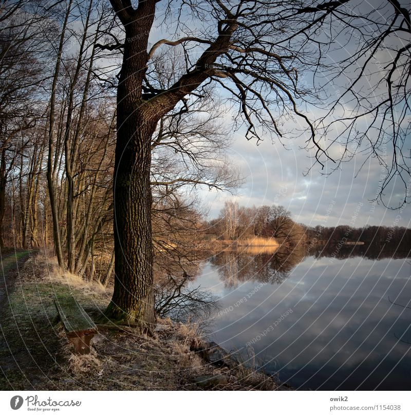 out Environment Nature Landscape Plant Sky Clouds Horizon Beautiful weather Tree Bushes Wood Branch Twigs and branches Stand Growth Far-off places Idyll Calm
