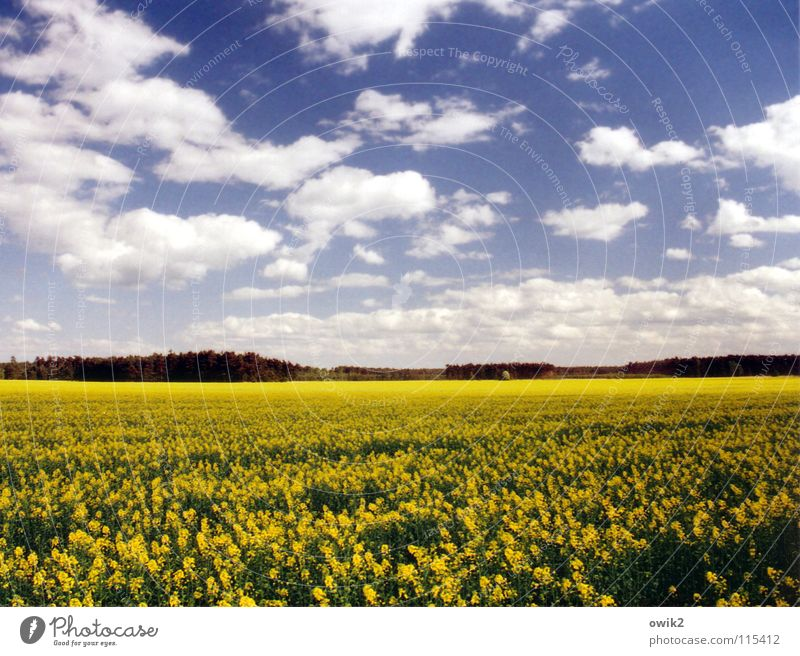 Nature Sky Green Blue Plant Black Clouds Far-off places Yellow Blossom Spring Landscape Field Germany Environment Horizon