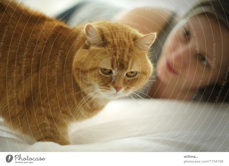 red house cat with young woman on the bed Cat Domestic cat Pet Woman Love of animals Young woman Observe Animal portrait young girl Bed at home relax already