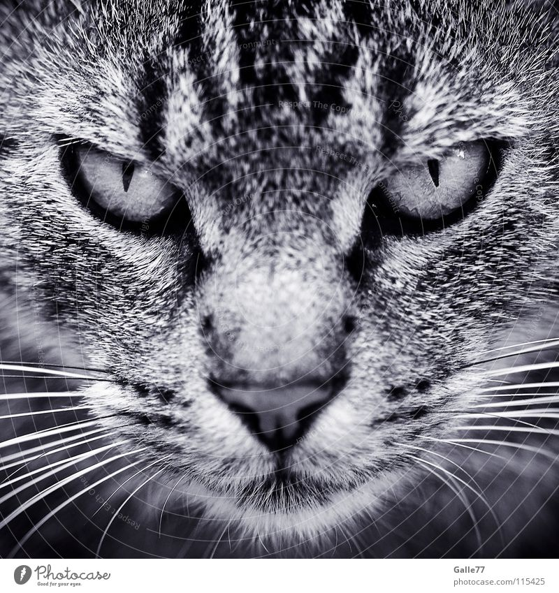 Cat Eyes Dark Observe Concentrate Anger Snapshot Shabby Evil Symmetry Domestic cat Appearance Lifeless Animal Whisker Harrowing