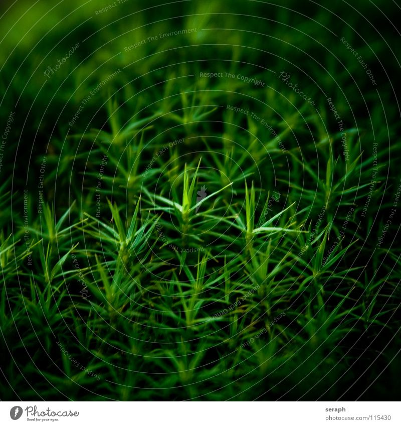 Nature Plant Green Background picture Small Growth Star (Symbol) Soft Stalk Moss Botany Nest Lichen Woodground Spore Symbiosis