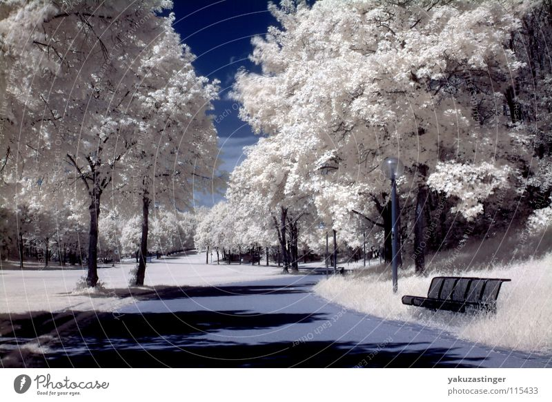 white nights Infrared Infrared color Tree Park Meadow Bushes Grass White Long exposure Sky Blue channel shifting Bench