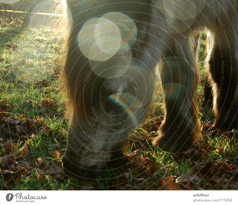 Sun Winter Nutrition Cold Food Horse Pasture To feed Mammal Meal Bangs Point of light Herbivore Animal shelter Heavy horse