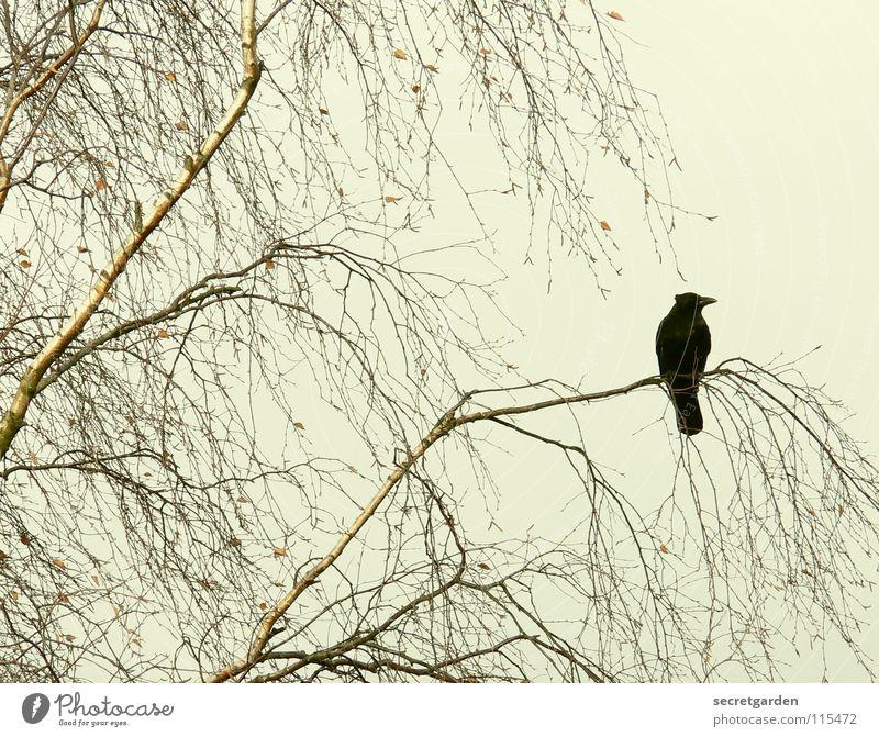 Nature Sky Tree Winter Calm Leaf Clouds Dark Relaxation Autumn Death Sadness Brown Room Bird Wait