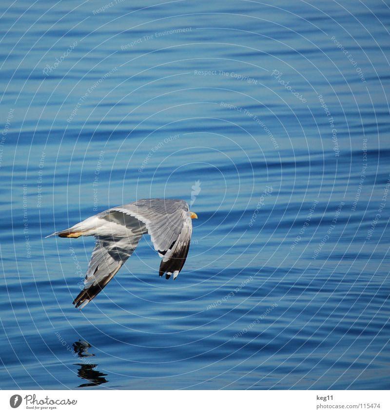 take off ... Bird Elba Vacation & Travel Ocean Beach Waves Sardinia Italy Coast Sky Water Flying Nature Blue Wind Joy Weather Mountain sea Sailing Dynamics