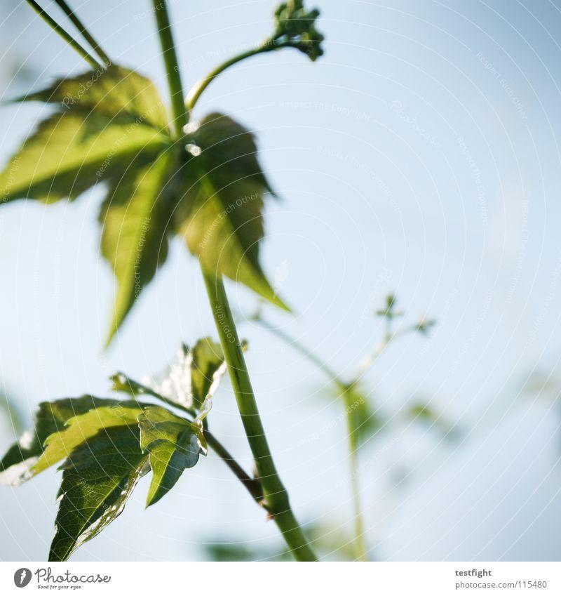 Nature Blue Plant Green Summer Warmth Garden Physics