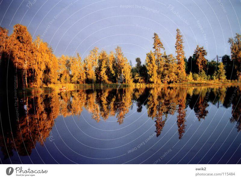Nature Water Sun Tree Red Landscape Calm Forest Environment Coast Lake Lamp Orange Bushes Illuminate Peace
