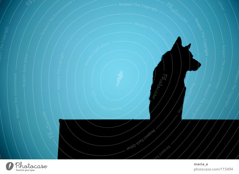 Blue Black Dark Dog Nose Large Force Safety Ear Protection Observe Strong Watchfulness Audience Testing & Control Loud